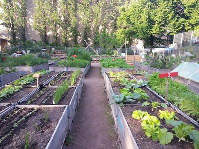 Gemüse-Pflücking & Entspannen im himmelbeet Gemeinschaft...