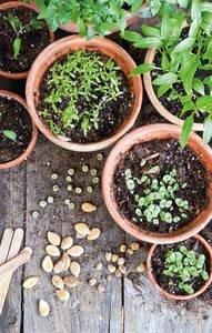 Entfällt! Mitmachen   Saatgut-Tauschbörse