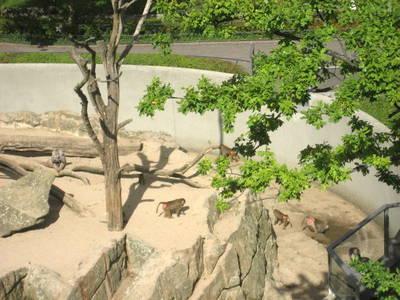 Bikini-Haus mit Blick auf Affen-Felsen