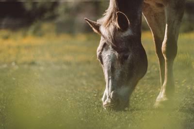 """Ponyclub """"Zu den flotten Hufen"""" ruft zum Wilder We..."""