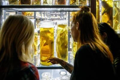 Zine Workshop im Museum für Naturkunde