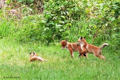 Kleine Wildtier-Führung am Hahneberg