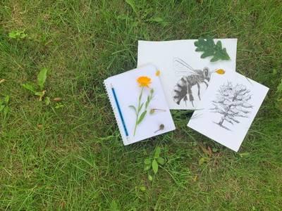 Einführung in das Führen eines Naturtagebuchs - Entdecke, Be...