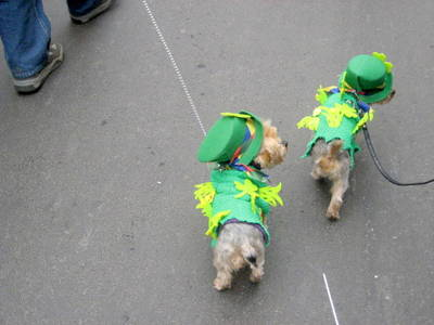 St. Patricks Day 2020: Partys, irische Pubs, Illumination, P...