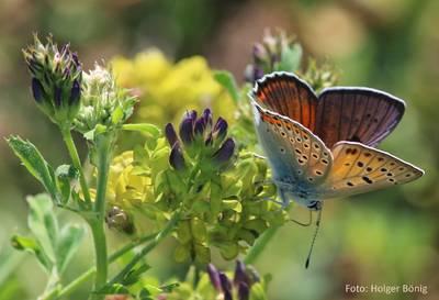 Ein Tag in der Natur an der Naturschutzstation Hahneberg