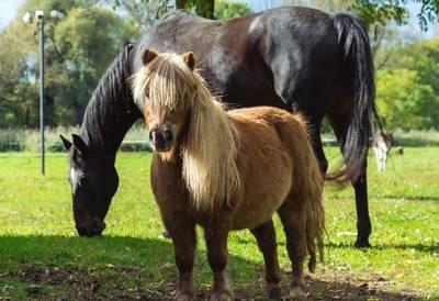 """Mittelalterfest beim Ponyclub """"Zu den flotten Hufen&quo..."""