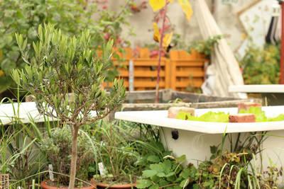 Urban Gardening in Neukölln: Gemeinschaftsgarten Prachttomat...
