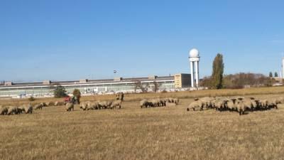 200 Schafe mit (ent)spannendem Rahmenprogramm & bewegend...