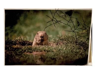 Groundhog and treasure map