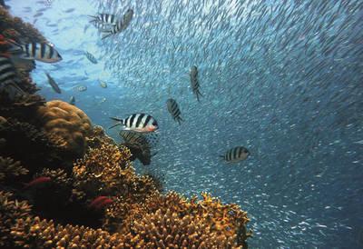 Themenraum - Meere und Ozeane